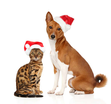 Kitten and puppy in Christmas red cap on white background. Christmas animals theme Stock Photo