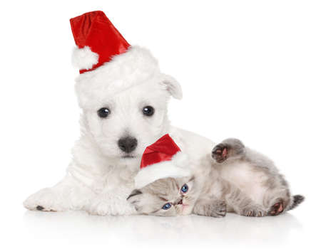 Puppy and kitten in Santa red cap on a white background. Christmas animals theme Stock Photo