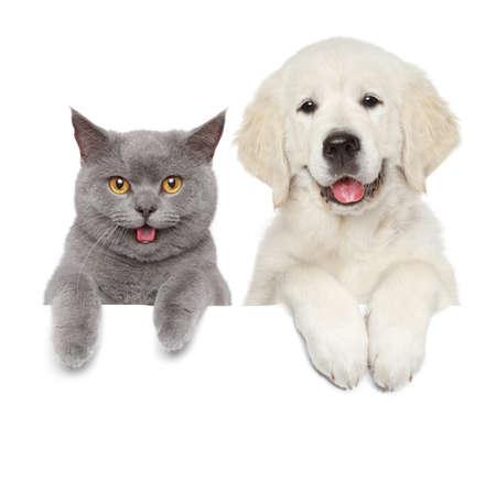 Perro y gato sobre bandera blanca. Temas de animales Foto de archivo