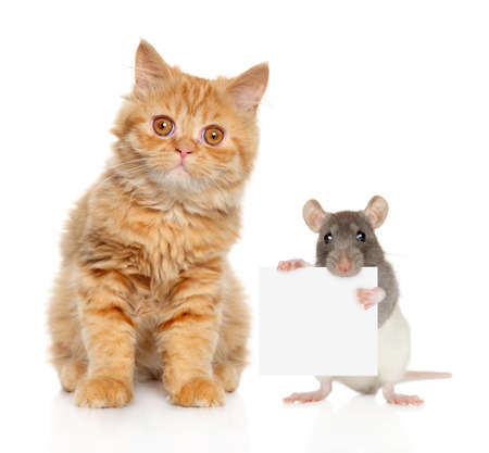 Cat and rat with banner looking at camera on white background.