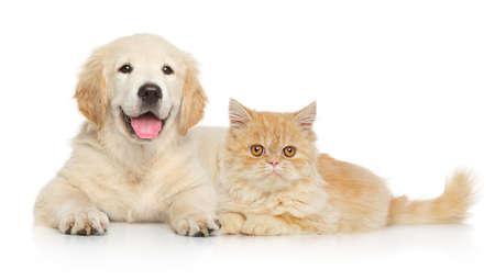 Perro y gato juntos acostado sobre un fondo blanco. Temas de animales Foto de archivo