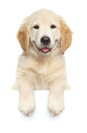 Perro feliz encima de la bandera, aislado sobre fondo blanco, vista frontal Foto de archivo