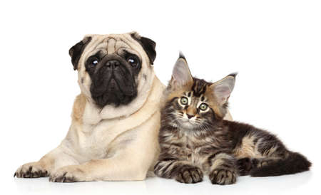 Cat and dog together lying on white background. Animal themes