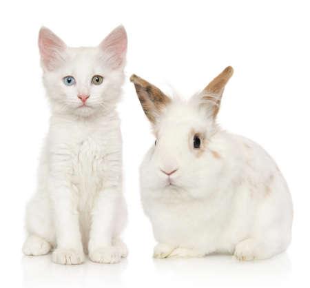 Portrait of kitten and rabbit on white background. Baby animal theme Stok Fotoğraf