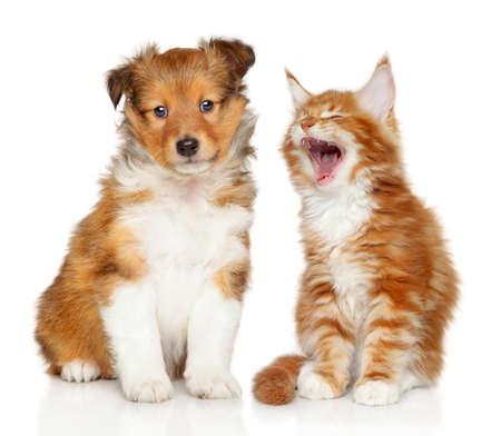 Chat et chien ensemble sur fond blanc