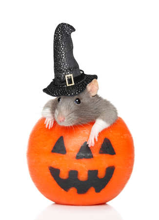 Decorative rat with witch hat sits in orange Halloween candlelight on a white background