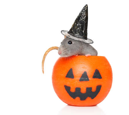 Decorative rat with witch hat sits in orange Halloween candlelight on a white background.