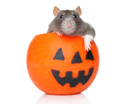 Decorative rat sits on a orange Halloween candlestick in front of white background