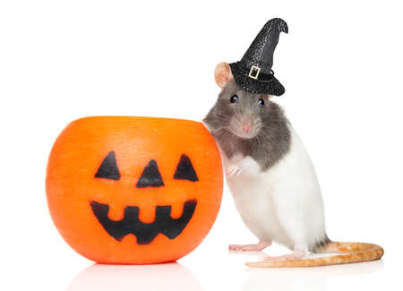 Decorative rat in Witch s hat sits near Halloween candlestick on a white background Zdjęcie Seryjne
