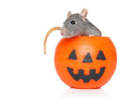 Decorative rat in orange Halloween candlelight on a white background