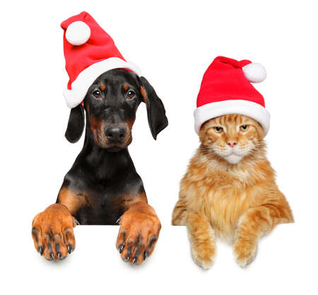 Cat and puppy together in red Santa hats, above banner isolated on white background Stock Photo