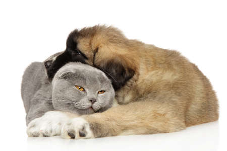 Best friends, cat and dog sleeping together on a white background