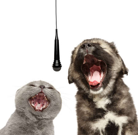 Cat and Dog sing together with a microphone, isolated on a white background