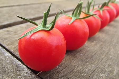 Freshly picked tomatoes 免版税图像