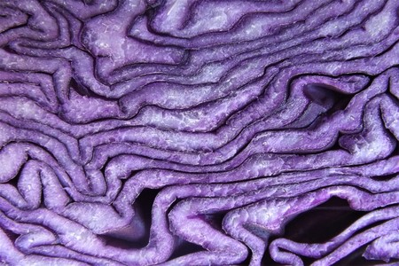 Detail of a cutted red cabbage