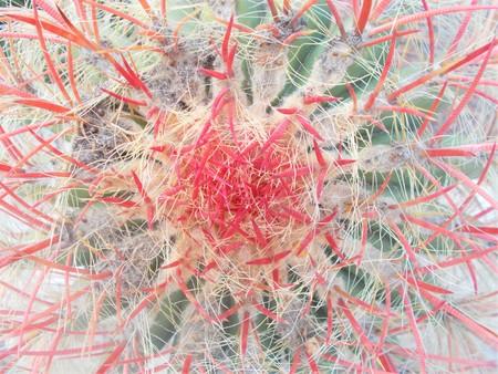 Close-up of criss-crossed cactus thorns (Ferocactus Acanthodes)