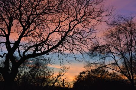 View of a forest with the leafless tree branches, and a cloudy purple and orange sky in the background. Winter landscape at blue hour