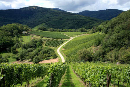 Route des vines in Alsace - France.Vineyard photo
