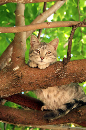 Young kitten sitting on the branch and observing surroundings.