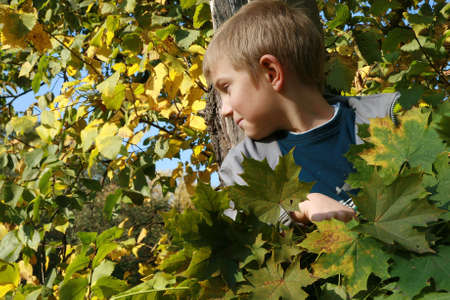 Little, blonde boy with leaves. Autumn park. photo