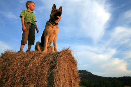 Six-year-old, white boy playing with the dog (Alsatian) on the meadow - summer in the mountains Stock Photo - 3676809