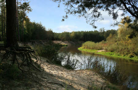scarp: River in forest and strange  root  of tree – Polish landscape