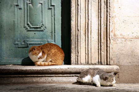 alarmed: Two cats on old stairs - Old Town in Dubrovnik - Croatia