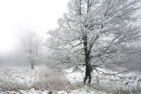 Winter trees. Foggy day by winter. Stock Photo - 3827401