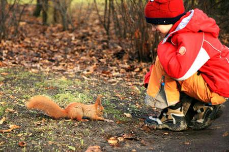 tame: El ni�o es la alimentaci�n de los mansos ardilla durante la caminata en el parque. Foto de archivo