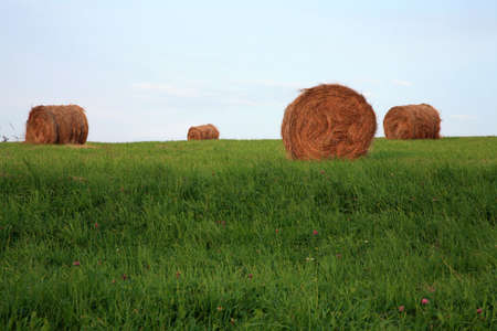 haymaking: Meadow after haymaking on the village, late summer. Seasonal work on Polish country, Poland.  Stock Photo