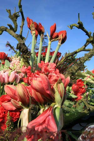 flower parade: Flowers composition, famous flower parade called Bloemencorso in Netherlands. Day of Spring.