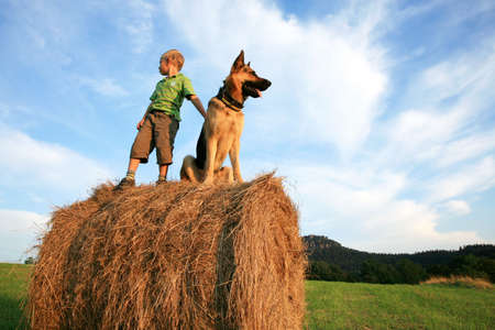 Little boy playing with the dog (Alsatian) on the meadow - summer in the country during summer holidays.