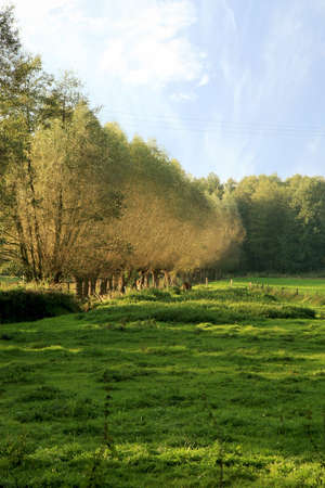 Green field in German country by morning. Row willow trees in mist. Stock Photo - 4612837