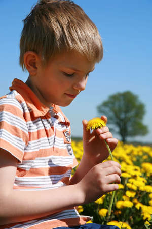 herbage: Little boy is picking bunch of dandelion on meadow full of yellow dandelions by may. Stock Photo