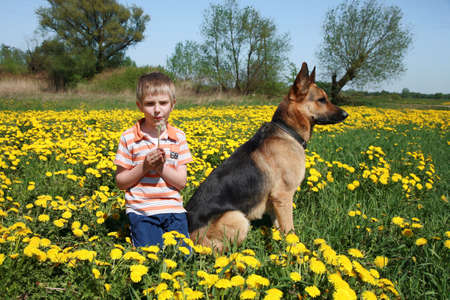 Little blonde boy playing with his large Alsatian dog on the wild meadow all in yellow dandelions during sunny day. Stock Photo - 4821727