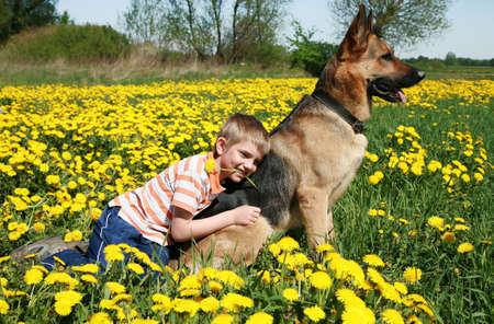 all in: Poco chico rubio jugando con su gran perro alsaciano en la salvaje pradera en amarillo todos los dientes de le�n durante el d�a soleado. Foto de archivo