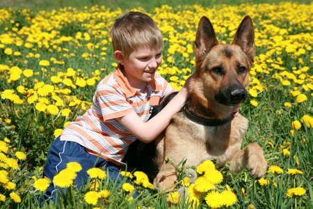 Little blonde boy playing with his large Alsatian dog on the wild meadow all in yellow dandelions during sunny day. Stock Photo - 4863948