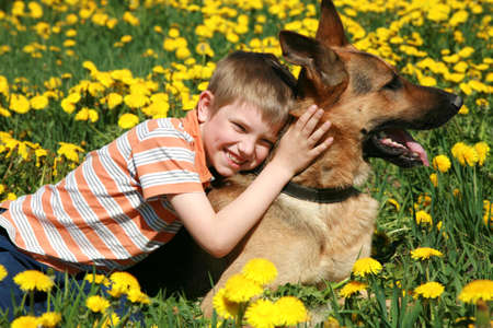 Little blonde boy playing with his large Alsatian dog on the wild meadow all in yellow dandelions during sunny day.  Stock Photo - 4863947