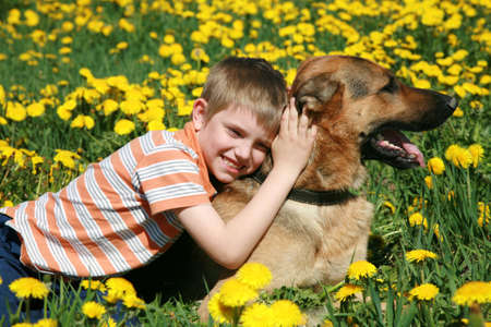 faithfulness: Little blonde boy playing with his large Alsatian dog on the wild meadow all in yellow dandelions during sunny day.