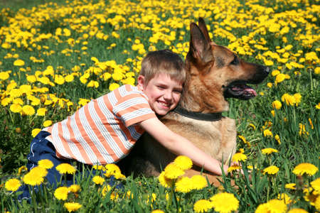 Little blonde boy playing with his large Alsatian dog on the wild meadow all in yellow dandelions during sunny day. Stock Photo - 4863954