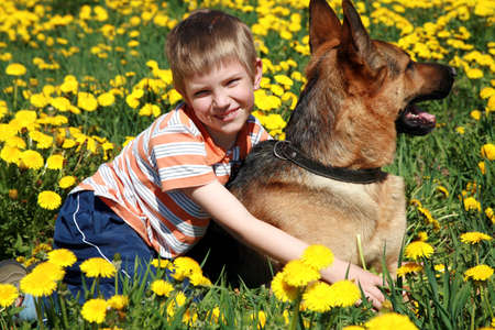 Little blonde boy playing with his large Alsatian dog on the wild meadow all in yellow dandelions during sunny day.  photo