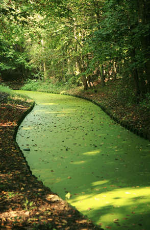 meandering: Meandering canal in Netherlands overgrown with duckweed. Urban park.