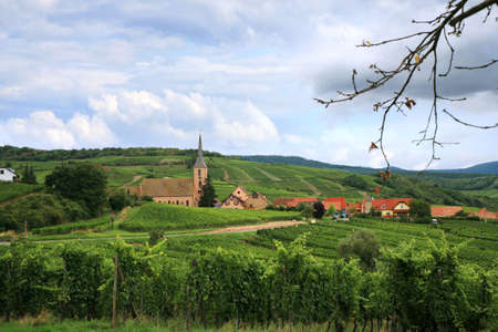andlau: Route des vines in Alsace - France, Vosges Mountains. Vineyard. French country.