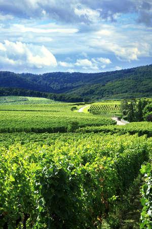Route des Reben im Elsass - Frankreich, Vogesen. Weingut. Französisch Land. Standard-Bild
