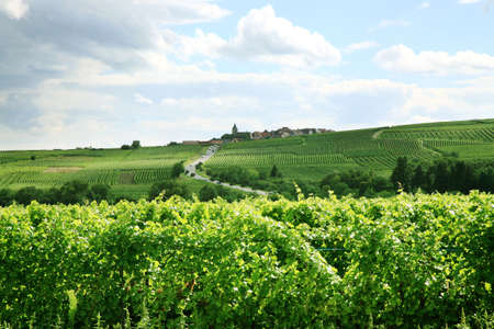 Route des vines in Alsace - France, Vosges Mountains. Vineyard. French country.