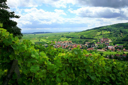 andlau: Route des vines in Alsace - France, village in Vosges Mountains. Vineyard. French country.