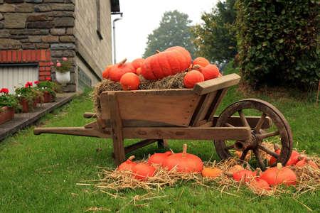 Malerischen Dekoration im Bauernhof in Belgien mit Stilleben, Fest des Kürbis Halloween-Tag. Herbst Kulturen.