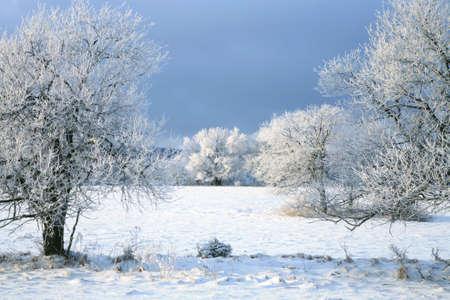 the january: �rbol de invierno, paisaje cerca de peque�o y pintoresco pueblo de Pasterka en Polonia. Atracci�n tur�stica famoso, Table Mountain.