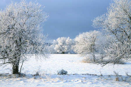 Winter tree, landscape near small, picturesque Pasterka village in Poland. Famous tourist attraction, Table Mountain. photo