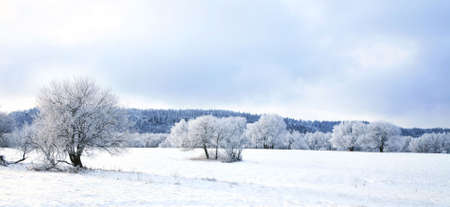 Winter trees, landscape near small, picturesque Pasterka village in Poland. Famous tourist attraction, Table Mountain. photo